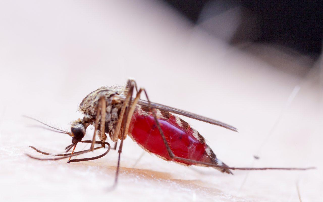 Migrating Diseases